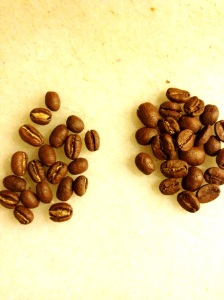 Grano de café arábica normal / grano caracolillo.