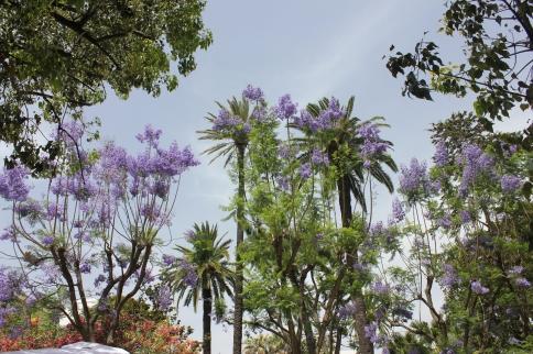 Plazas en pleno centro con una vegetación exuberante.
